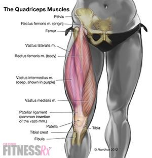 Parallel Squats on Leg Thrust Machine - Tighten Your Thighs and Hips
