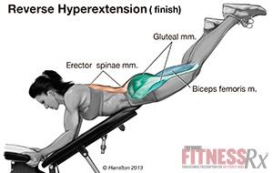 back hyperextension without machine