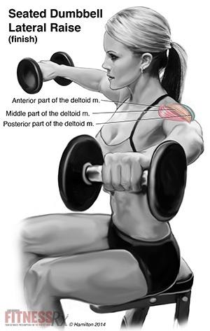 Seated Dumbbell Lateral Raises - For Firm and Shapely Shoulders